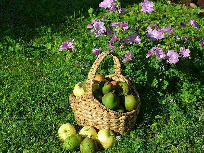 корзинка с яблоками и грушами